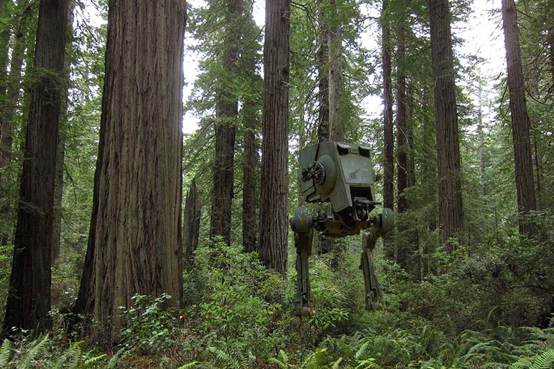 redwoodforestatst[1]